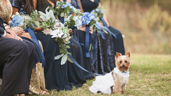 brides dog posing with bridal party in revelry bridesmaid dresses and separates