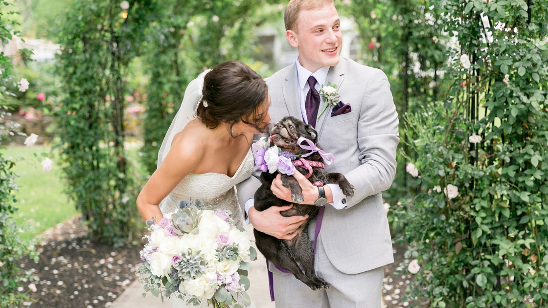 Bride and groom kissing dog on wedding day purple wedding greenery dig tingue sticking out