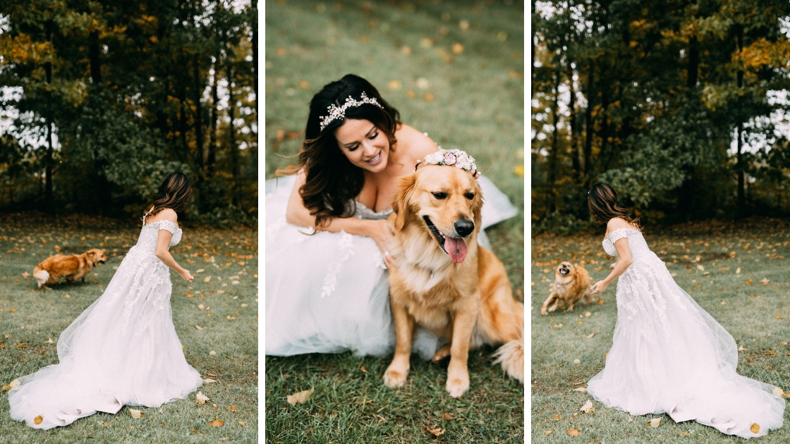 Golden retriever dog running around on wedding day bride with crown and dog with flower crown happy having fun in wedding day