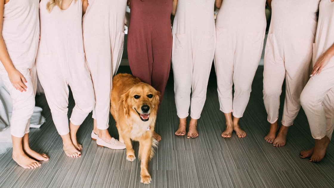 Golden retriever dog smiling on wedding day 7 bridesmaids in white rompers and bride in burgundy romper