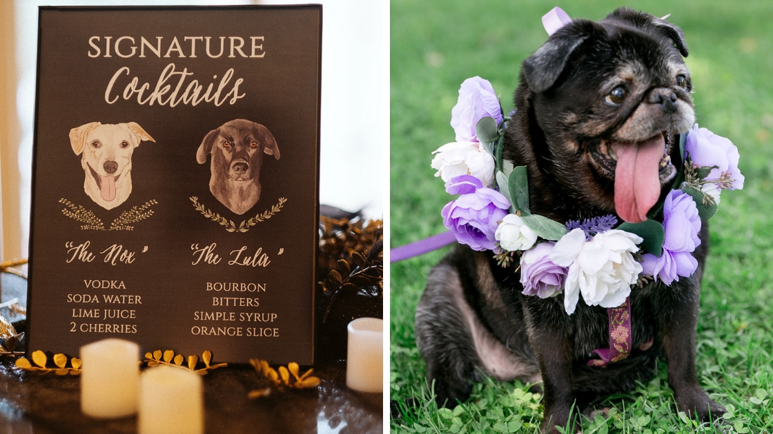 Rachel Varina wedding day signature dog drink lula nox dog purple flower collar tongue lolling out